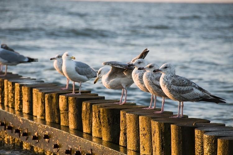 Ciekawe noclegi nad Bałtykiem